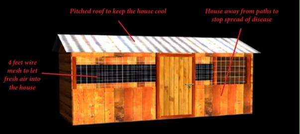 kienyeji chicken house designs kienyeji chicken farming