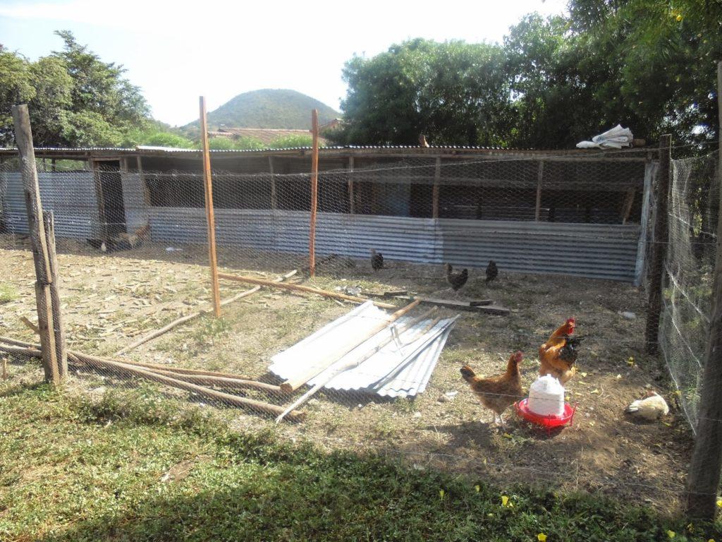kienyeji chicken farming manual pdf Archives - Kienyeji Chicken Farming